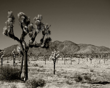 JoshuaTree National Park