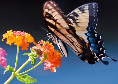 DSC_4733_butterfly1_2