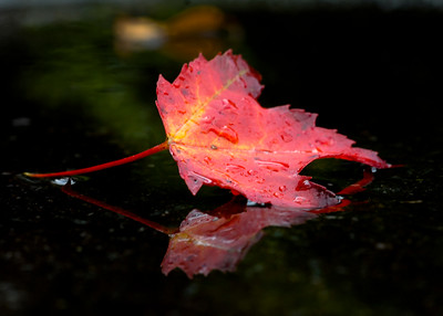 This was a leaf in the driveway of my buddies place in Elk River, NC.  It was the only leave I could find so early fall.