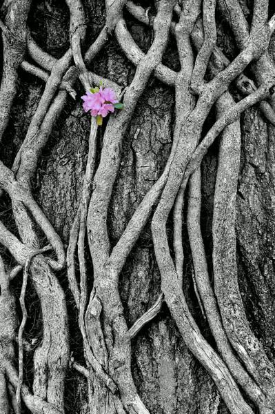 Flower on Vines, by David Everett