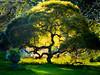 Tree of Life, by David Everett