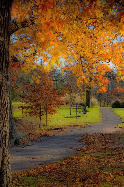 Soft Fall Hues, by David Everett