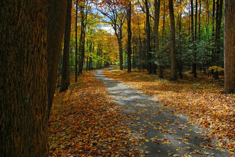 Peaceful Woods, by David Everett