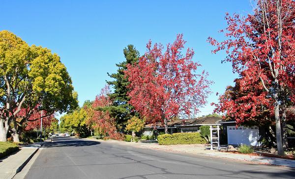 1863 Orangetree Lane, Mountain View