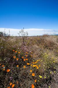 02 San Luis Obispo-2010-_MG_4501