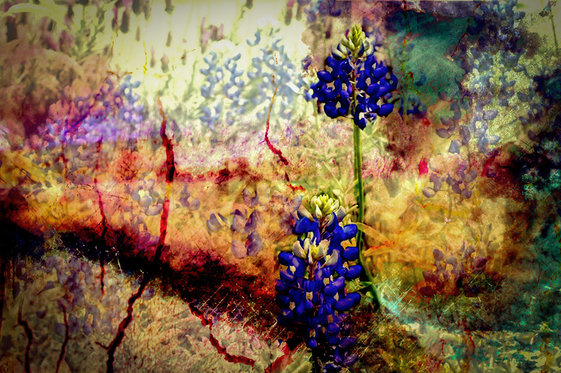 Trippy Bluebonnet