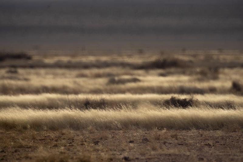 Grass Compression - West Texas