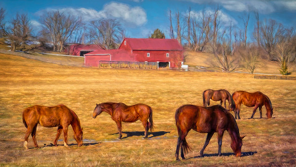 Tufton Horse Farm - Worthington Valley, Maryland