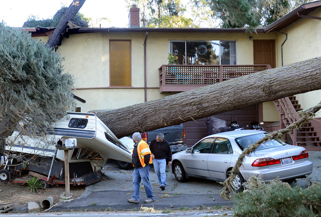 . Rico Rosa ducks under a pine tree which fell and smashed his camper  while surveying damage with a PG&E worker after evening of high winds in Pacific Grove on Monday morning February 1, 2016.  Another tree hit Rosa\'s house. (David Royal - Monterey Herald)