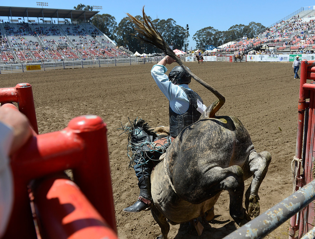 . Justin Hendrix of Belton,Texas leaves the chutes on a bull during the California Rodeo Salinas at the Salinas Sports Complex on Saturday July 23, 2016. (David Royal - Monterey Herald)