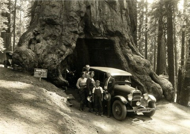 "The Ferris Family - circa 1930 - Yosemite National Park - California - Photo courtesy of Scot Ferris / Oak Hill, VA<br /> <br /> From Back to Front:<br /> <br /> Charles Ferris (1883-1958) - Nickname:  Charlie<br /> Roberta Ferris (1914-2008) - Daughter of Charlie & Minn [Yaden] Ferris<br /> Minnie Melvina [Yaden] Ferris (1888-1979) - Nickname:  Minn<br /> Boyd Ferris (1919-1999) - Son of Charlie & Minn [Yaden] Ferris<br /> ""Mr. Clark"""