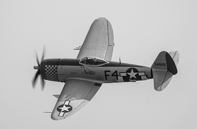 "Republic P-47D Thunderbolt 549192 ""Nellie The Jug"" B&W version at Flying Legends Airshow 2018 By David Stoddart"