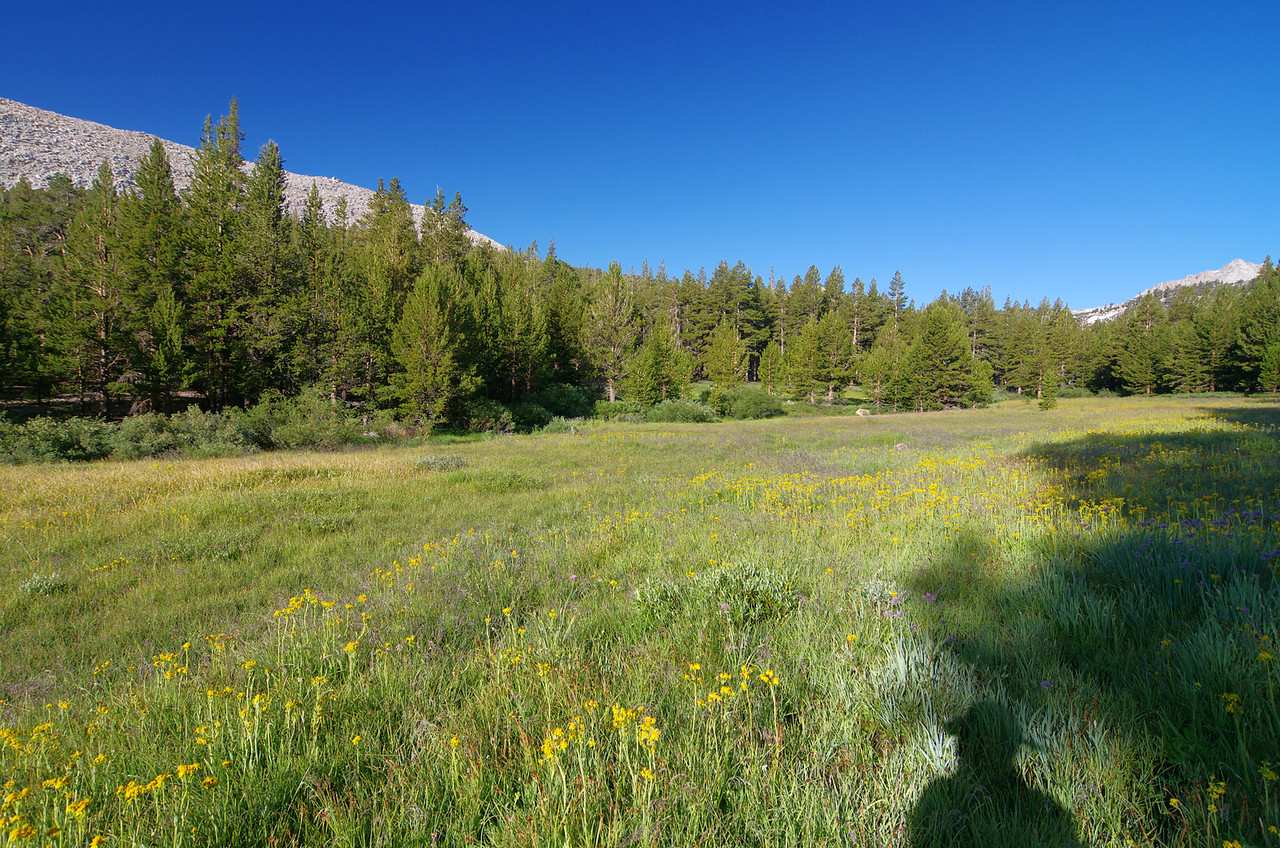 A close view of a pretty meadow doesn't come without costs--Mosquitoes and plenty of pesky ones who won't leave you alone without the aid of your friends insect repellant--I forgot mine.