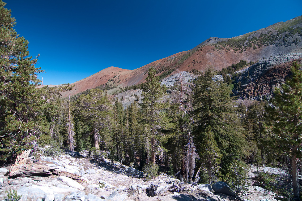 The view from around 9,700 ft up the Duck Pass Trail