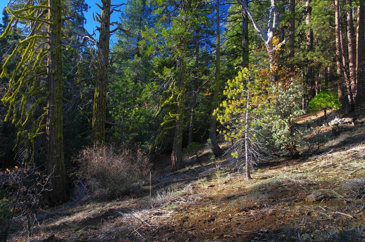 Trail-less views.