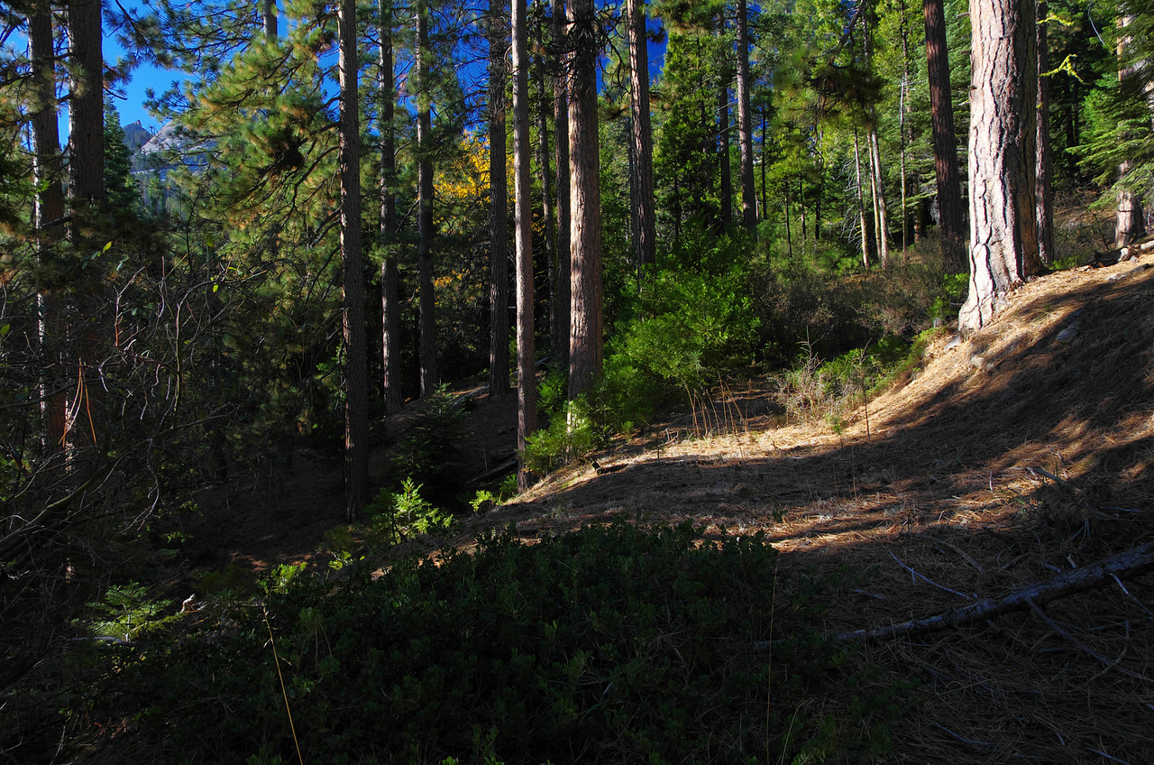 Trail-less views start to become hinted with sections of foot travel and old logging roads that will turn into trail soon.