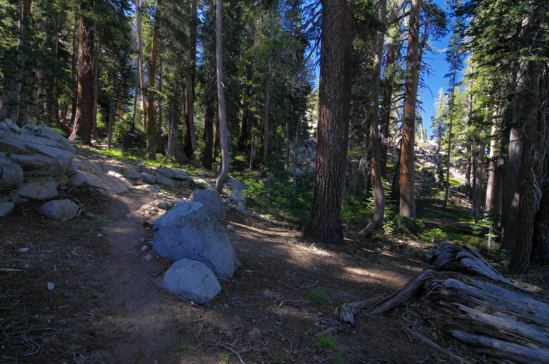 A nice shaded and green area of the Hell for Sure Trail around 9,050ft just before a series of switchbacks take you to the unnamed pass and out of the area that Post Coral Creek flows down through.