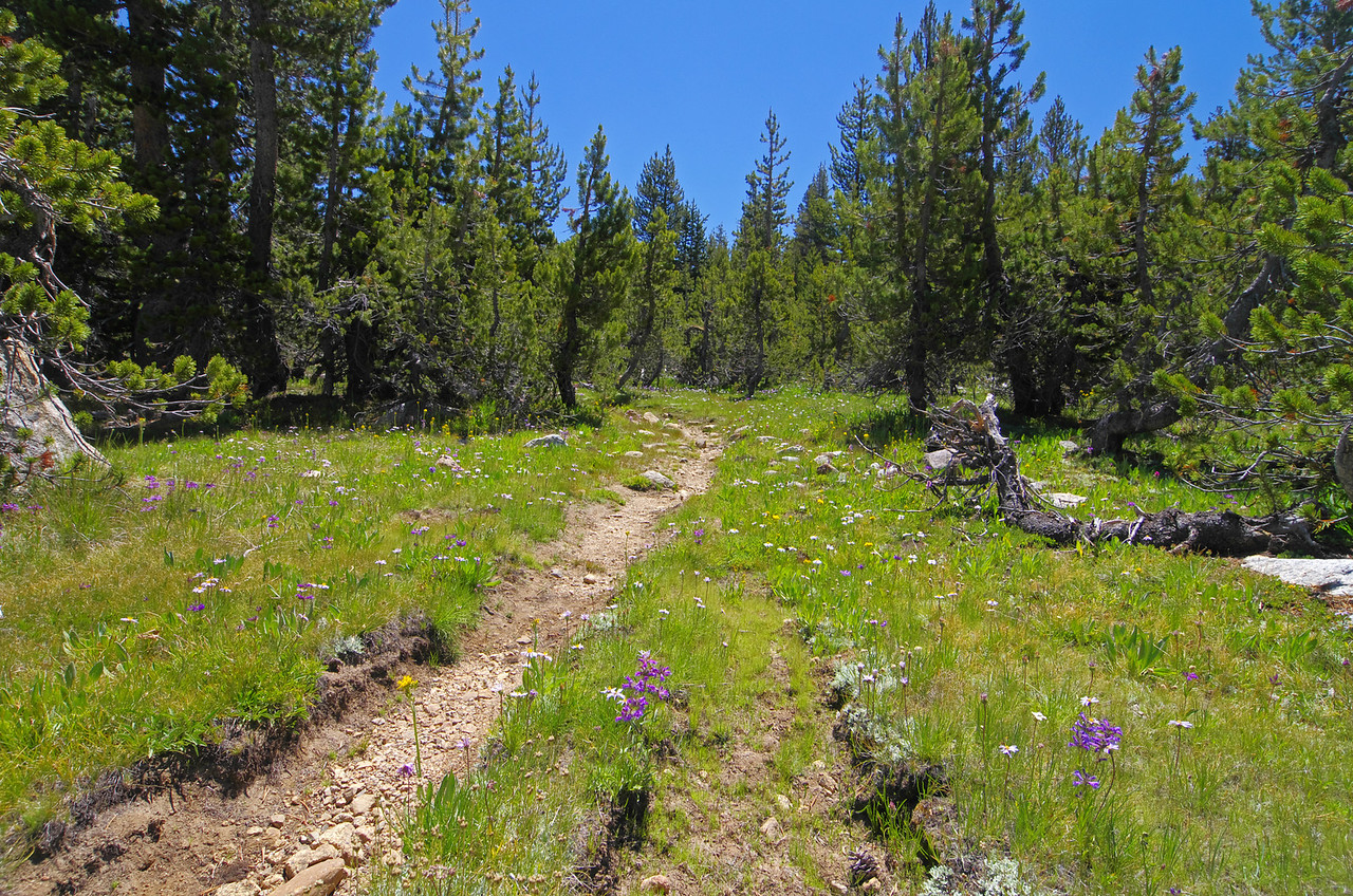 "About 11.9 miles in and around 9,790ft, there are some nice flat stretches of ""Hard-to-miss-the-trail,"" lined with nice green vegetation on either sides."