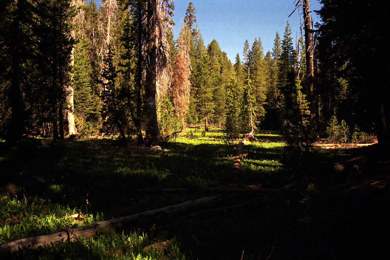 A meadow near the Fernandez trailhead