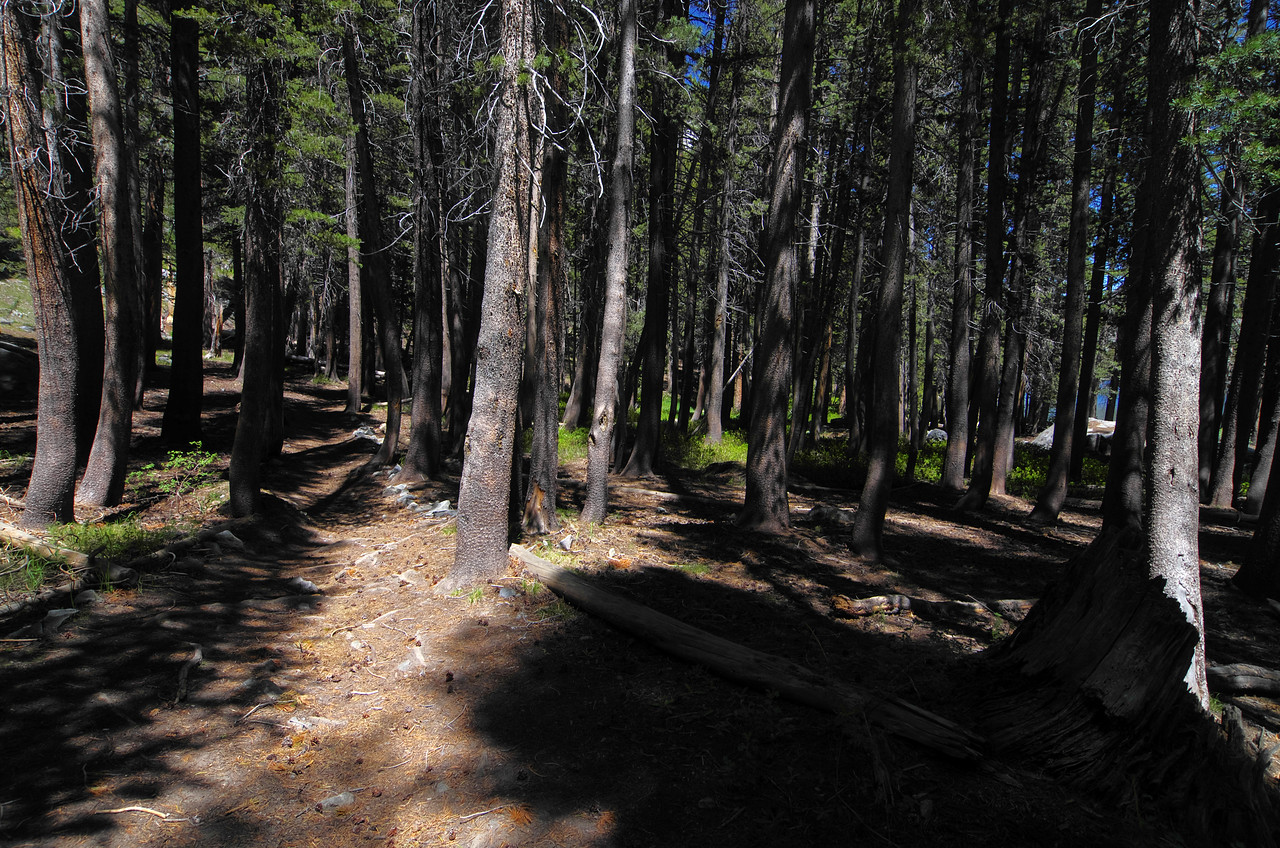 I guess this is the best picture to reason as to why they call it the Shadow Creek Trail.  There are a lot of trees that shade the trail between Shadow Lake and Ediza Lake.