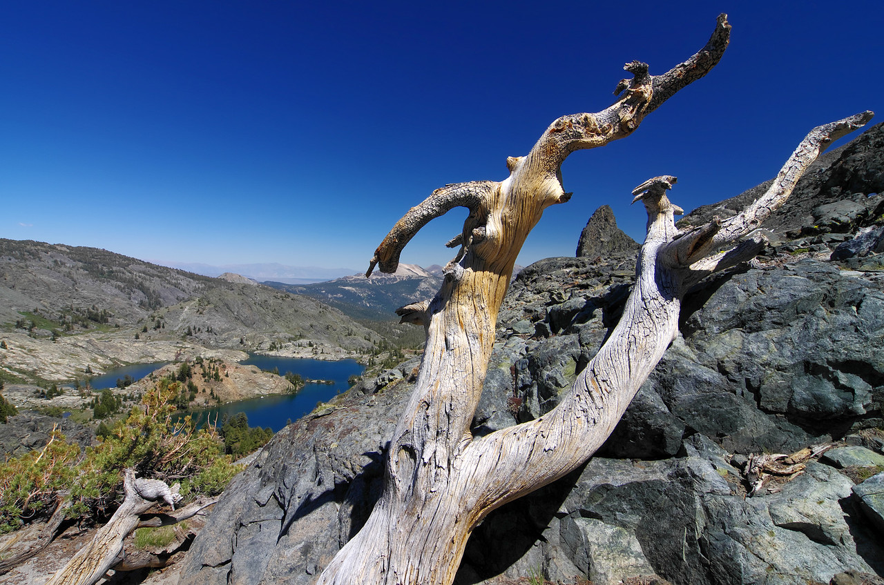 Some gnarly looking dead wood up above Minaret Lake.