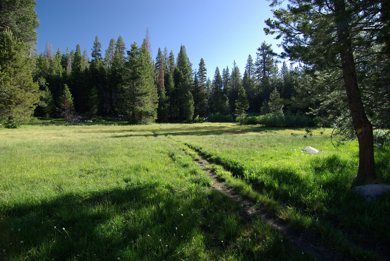 A Meadow around 8,000ft
