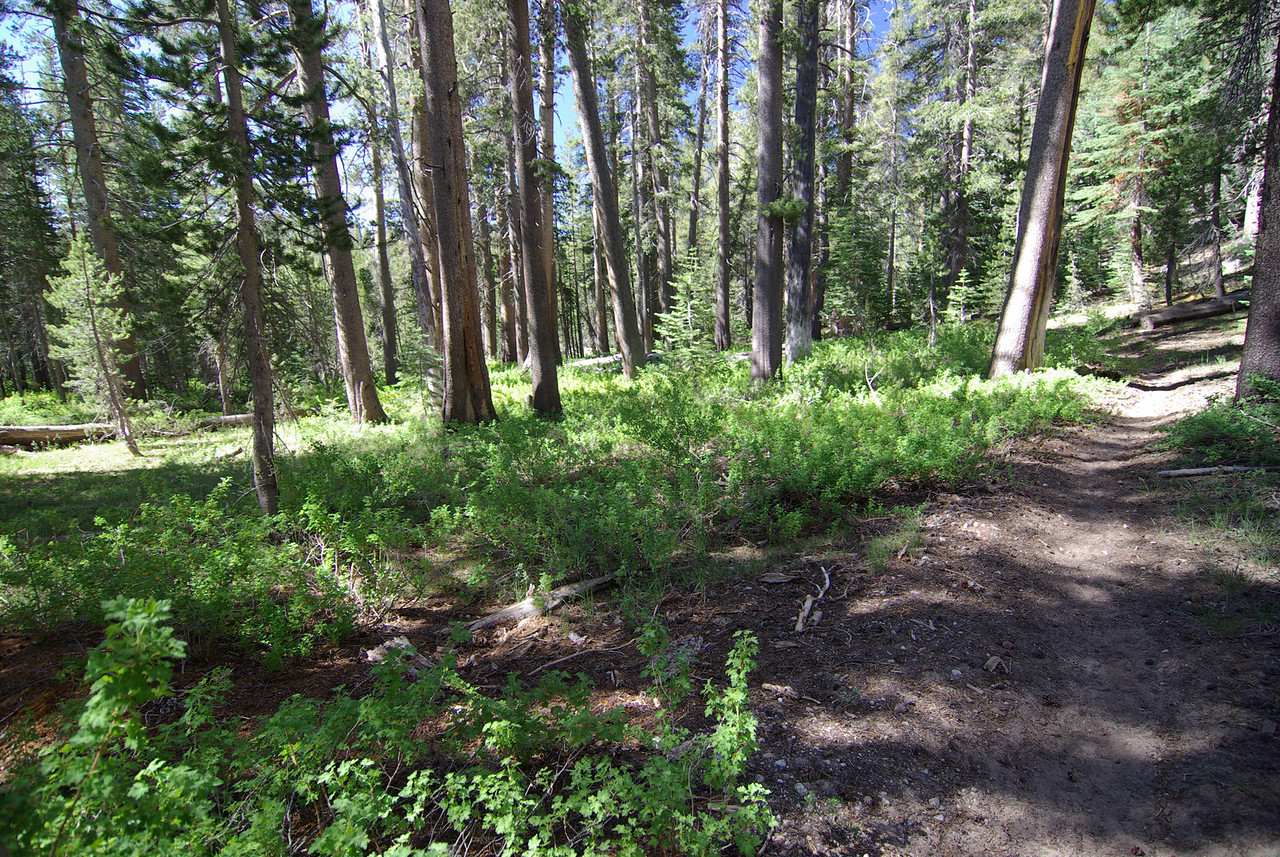 The Goodale Pass Trail by Graveyard Meadows