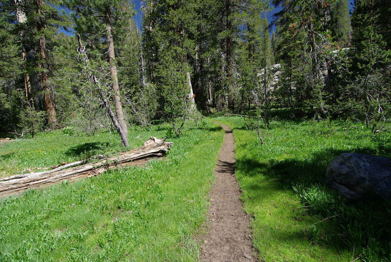 The Goodale Pass Trail just North of the Graveyard Meadows