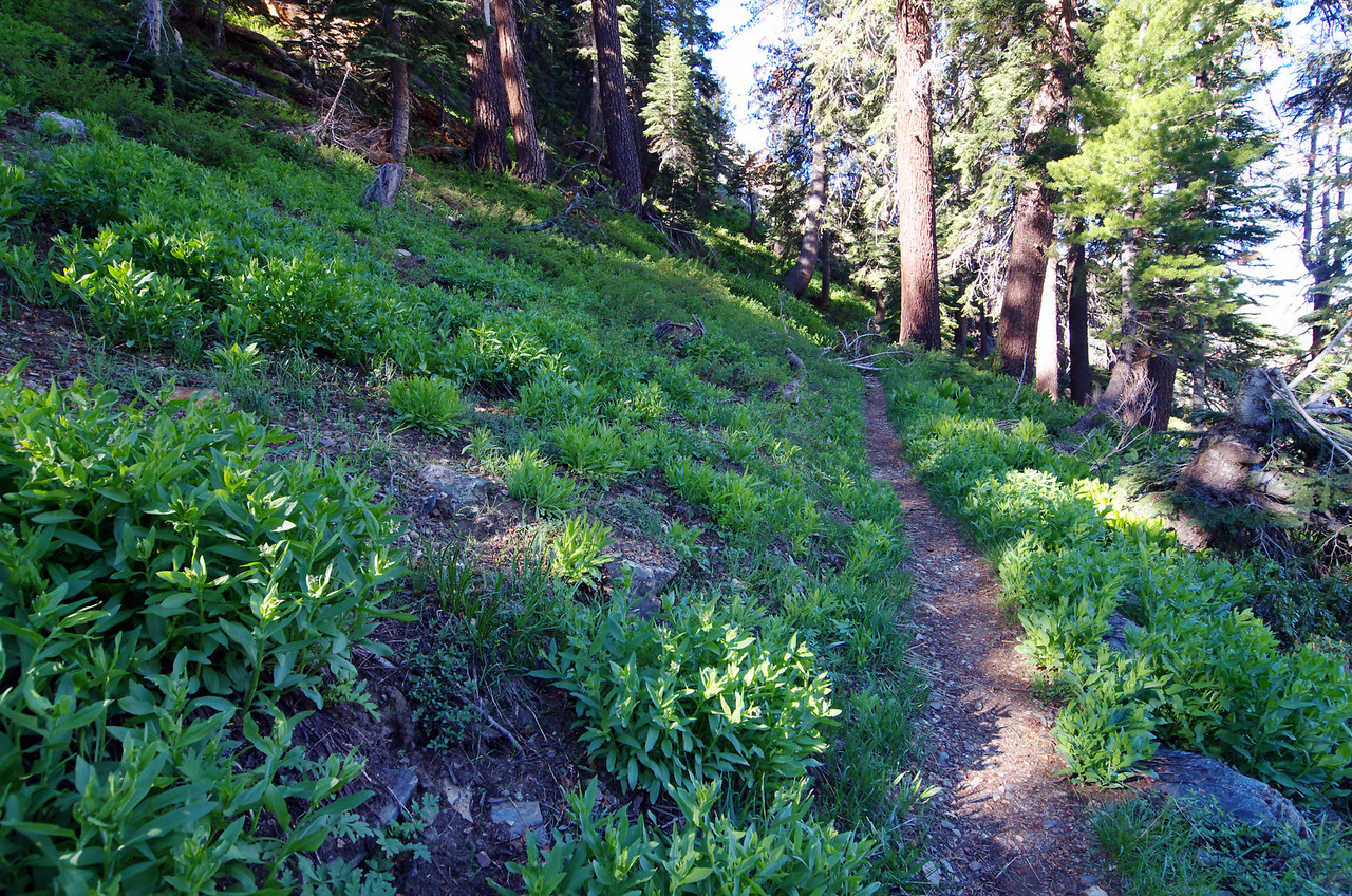The Trail just above the Monarch Creek Crossing--about 8,900ft.