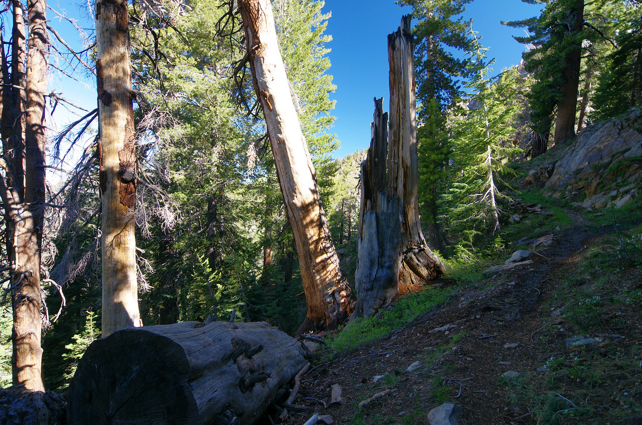 The Trail--around 10,000ft.