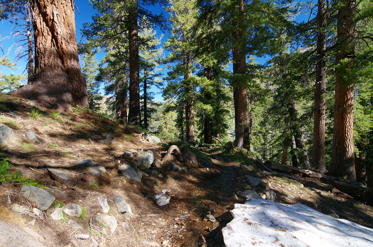 Looking back down the section of the Sawtooth Trail were I spotted the small pack of deer--about 9,650ft.