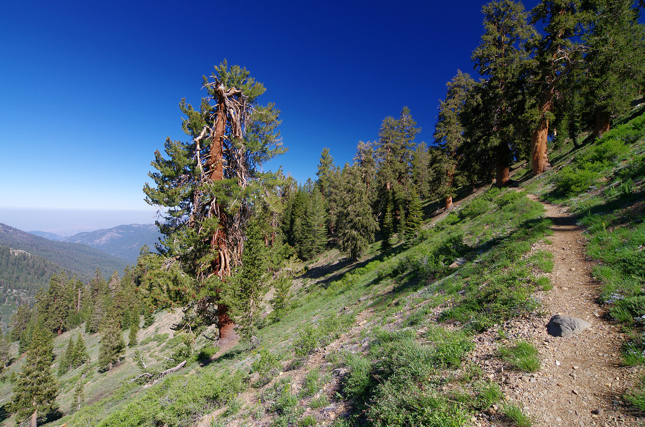 Climbing the last stretch of snow-free trail before the trail conditions change dramatically--about 10,150ft.