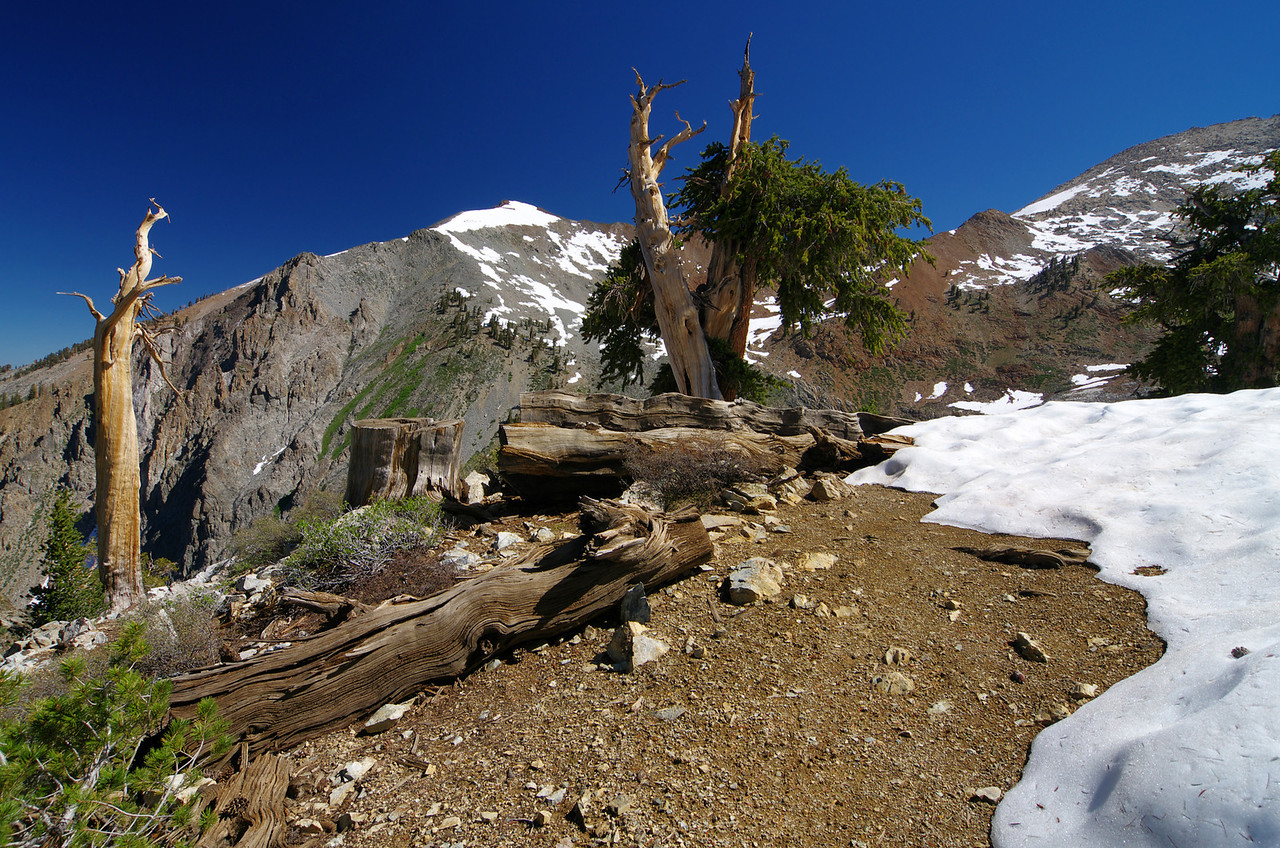 Another dramatic change--the tree's disapear--about 10,275ft.
