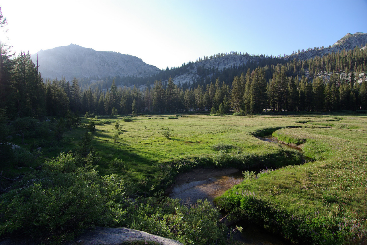 Silver Pass Meadow