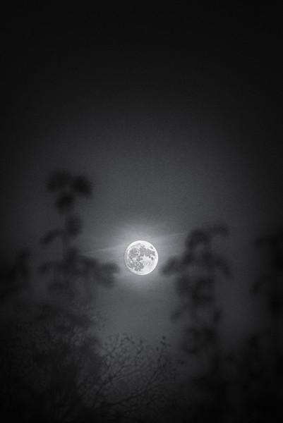 20161112_moon_DSC_3733-Edit