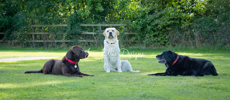 Dogs-8182