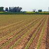 Farmland - Kidwell Road