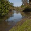 Putah Creek -Pedrick Road bridge area