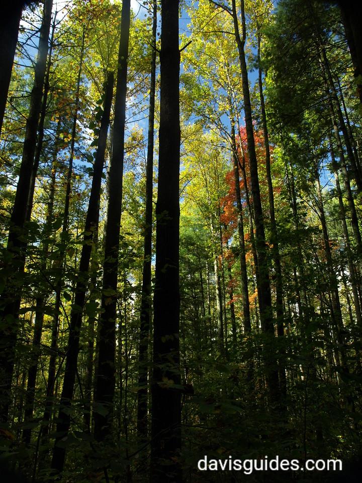 North Georgia fall colors