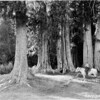 Park ranger beneath cedar and spruce trees near old Olympus Ranger Station, proposed Olympic National Park, 1936