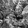 Lake beneath Hallett Peak, Rocky Mountain National Park, 1938