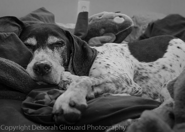 Gunther snoozin'