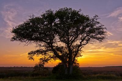 Sunset on Cedar Island
