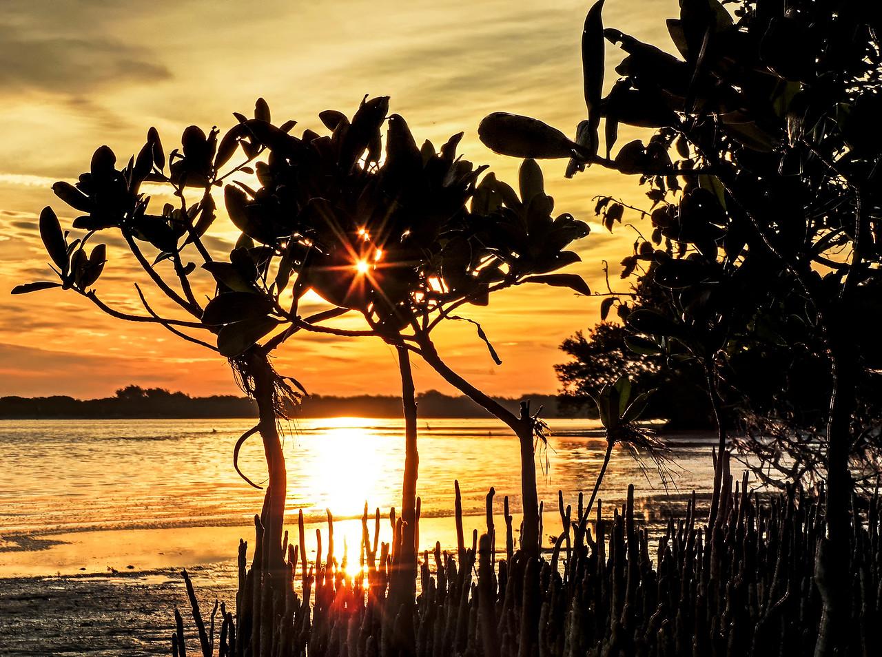 mangroves0094-2