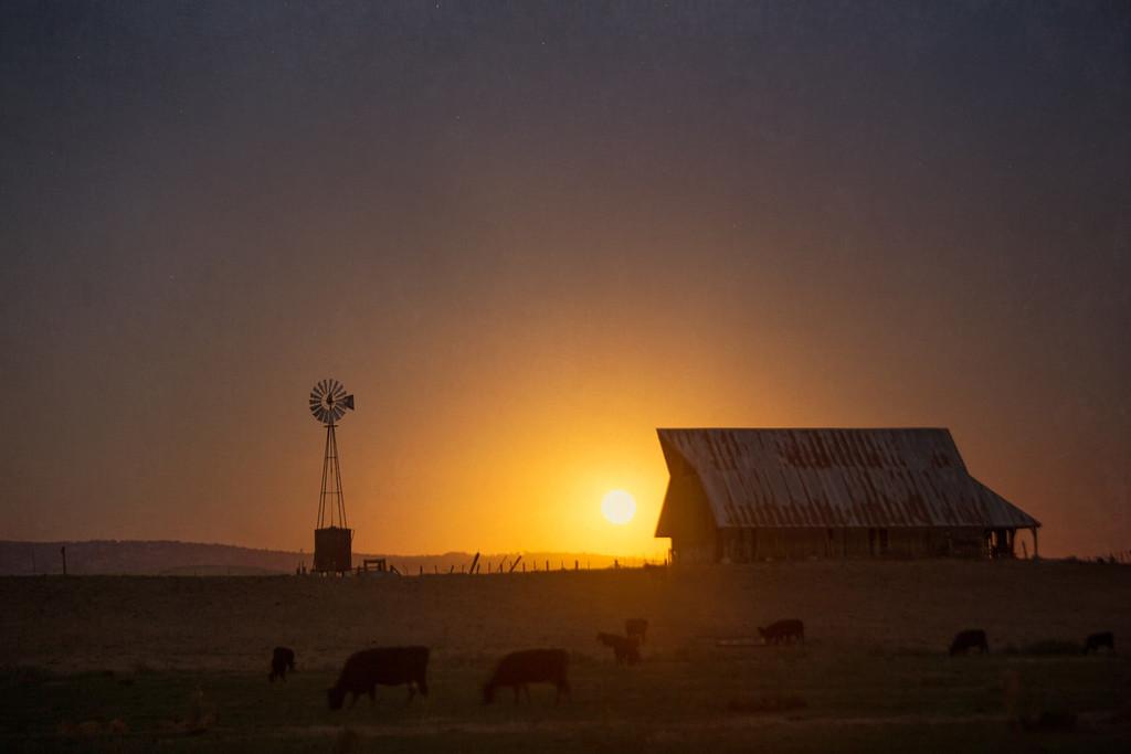 Barn, Cattle & Full Moon Rising