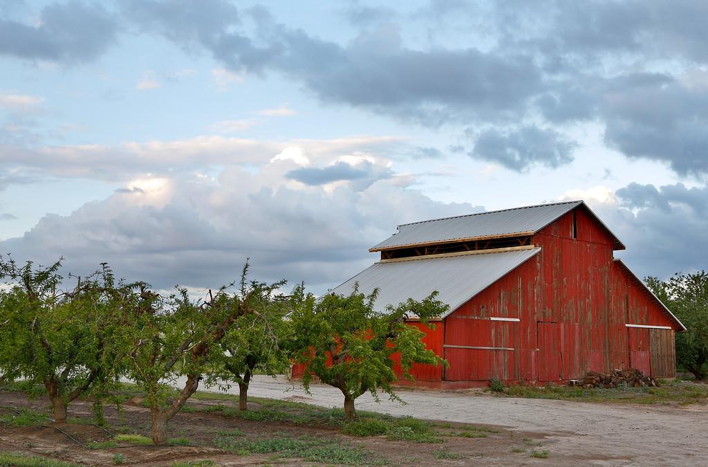 Red Barn & Peach Trees