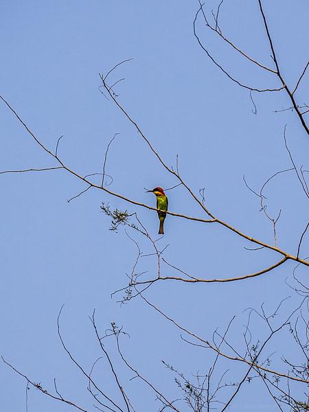 Traffic Light Bird