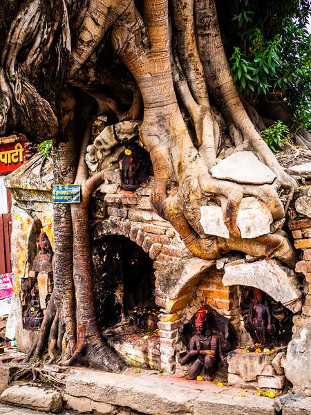 Tree Temple