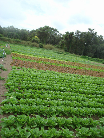 Jessicas Organic Farm