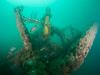 Kelp bass, sheephead, and tunicates inhabit the conning tower of Uribe 121 sixteen months after sinking.